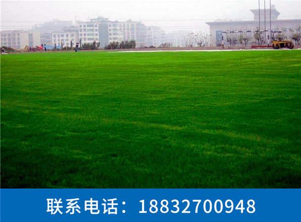 假草坪价格厂家直销东营